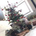クリスマスがきた!