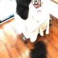 髪は梳いたらダメなんですか?